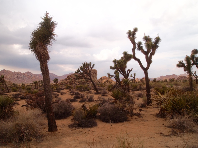 Joshua Tree, California 2015