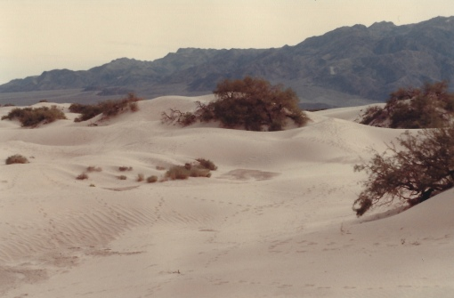 Sand dunes, Death Valley 11/7/79