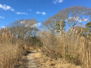 path at Cape May Point State Park