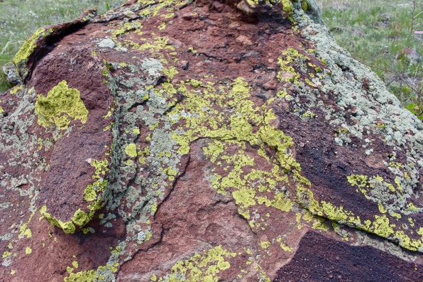 lichen on the red sandstone