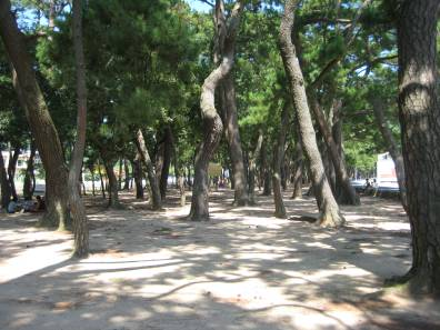 Sparse grove of trees