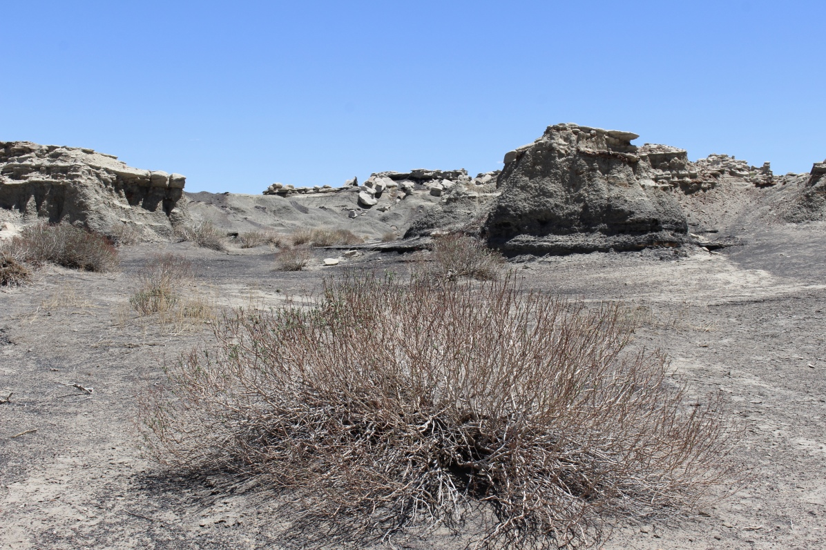 Badlands at Bisti/De-Na-Zin Wilderness