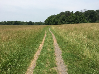 Manassas National Battlefirst - First Manassas Trail