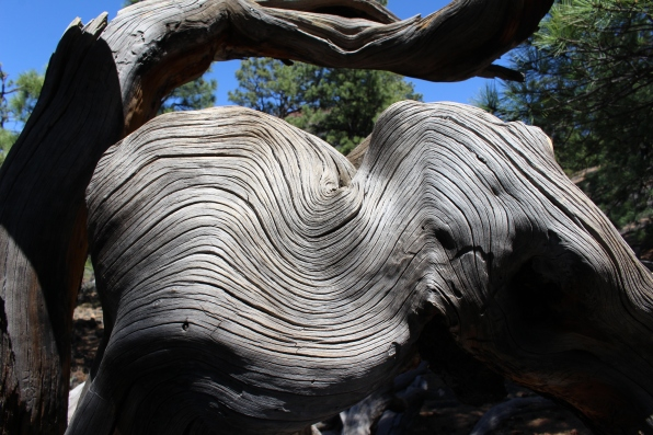 tree swirls