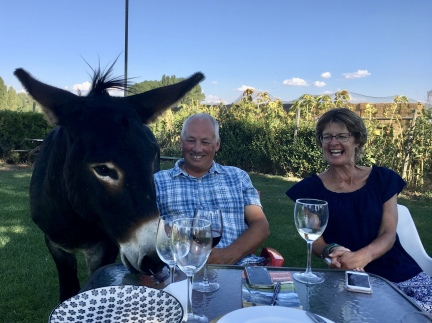 Donkey with Simon and Karen at Vilarmentero de Campos