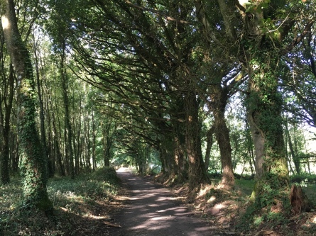 wooded path in Galicia