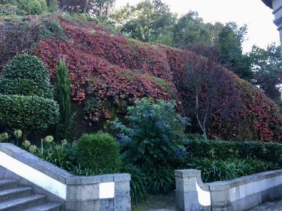 red bushes at Bom Jesus