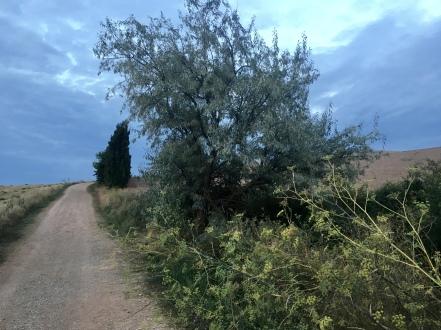 Villamayor de Monjardín to Los Arcos
