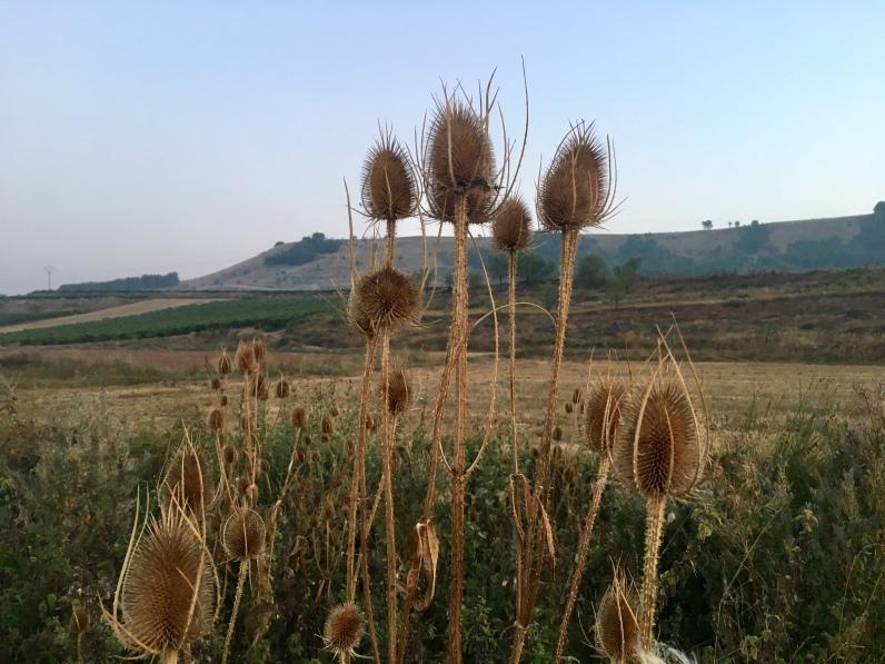Spanish weeds