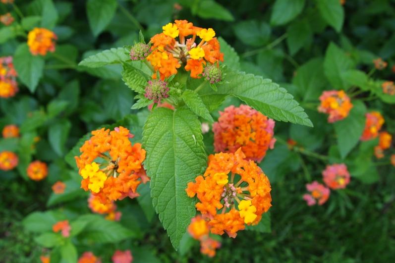 flowers in Marlbank