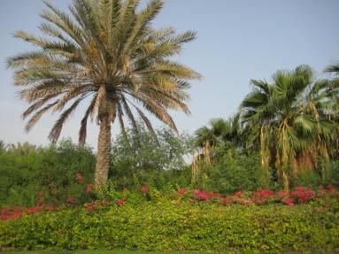 grounds at Burj Al Arab