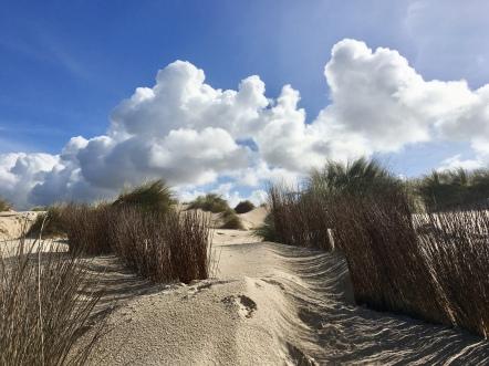 Peniche dunes