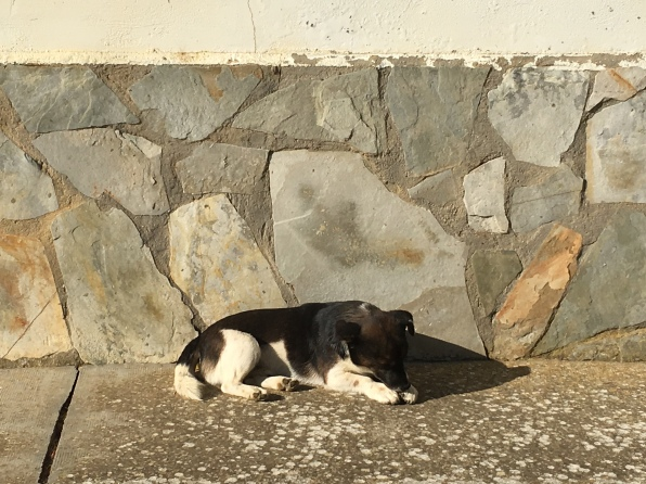 dog at rest in Moratinos