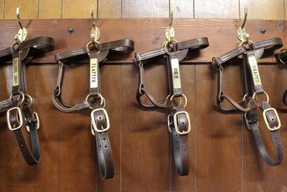 famous bridles