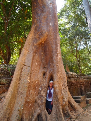 me in a tree at Ta Prohm