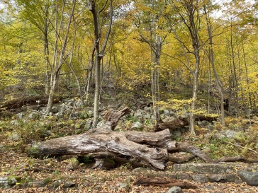 Mary's Rock hike
