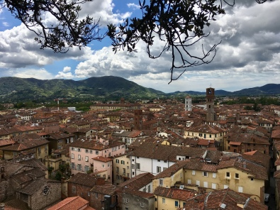 view from the Torre Guinigi in Lucca