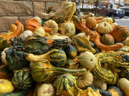 gourds at Whole Foods