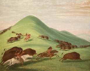 """American Buffalo"" by George Catlin"