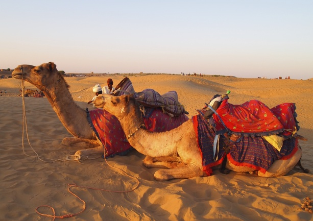 "Camel ""safari"" in Jaisalmer"