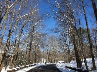 snow days, Jan 15