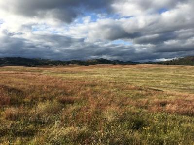 Wildlife Loop Road, Custer State Park