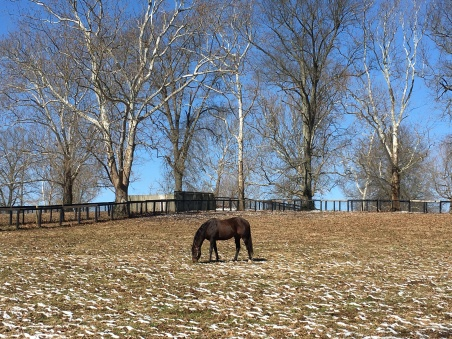 stalliion at Claiborne Farm, Lexington, KY
