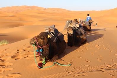 Sahara desert at Merzouga
