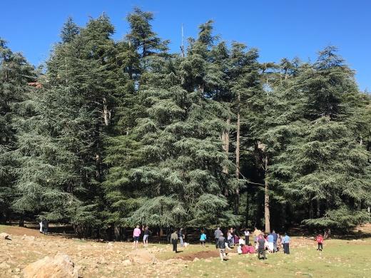 cedar forets at Mischliffen