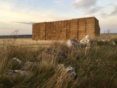 haystack buildings