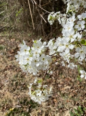 Walk at Meadowlark Gardens on March 16