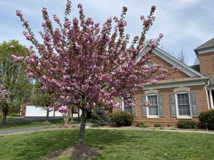 11 minutes - blossoms