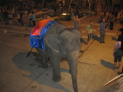 touristy elephant rides in Bangkok