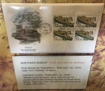 Northern Bobcat