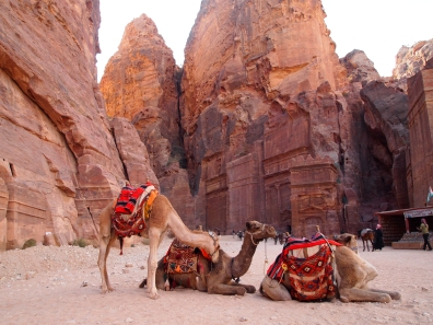camels in the Outer Siq