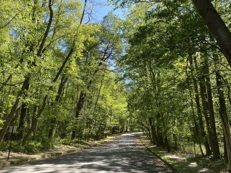 Foxclove Road