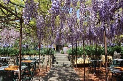 wisteria arbo