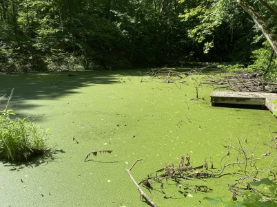 a green pond of sludge