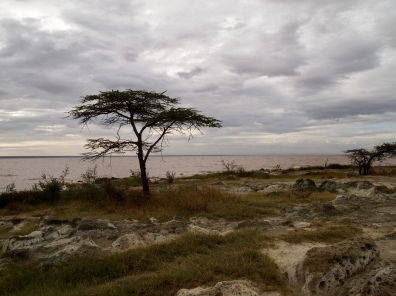 pumice stone ecozone at Lake Langano