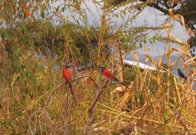 drive to Lake Langano