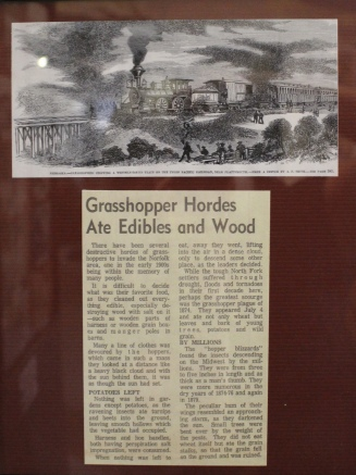 Grasshopper hordes