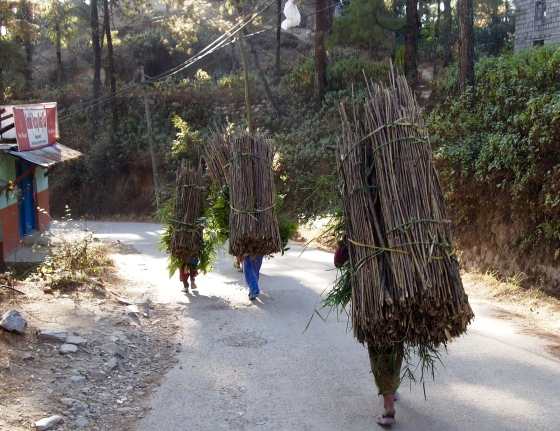 Ladies carrying bundles of wood