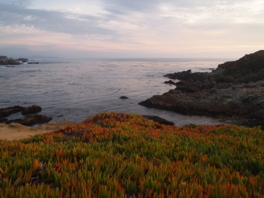 Pebble Beach near San Francisco 2014