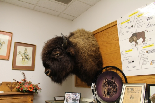 bison head in the Madison County Historical Society Museum