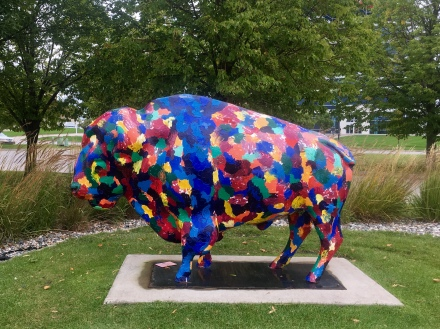 buffalo at the Visitor's Center