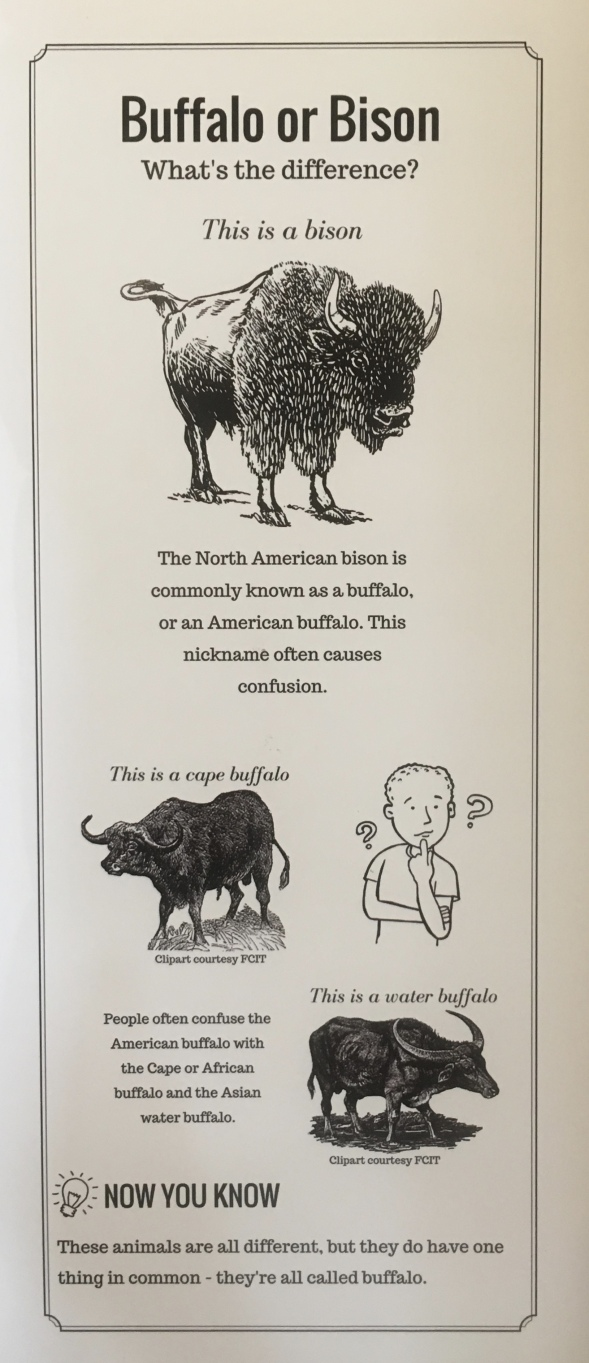 Buffalo or Bison: What's the Difference?