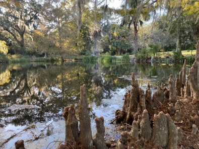 Cypress knees at Magnolia Plantations & Gardens