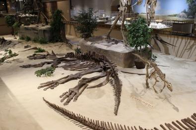 Thescelosaurus & co.