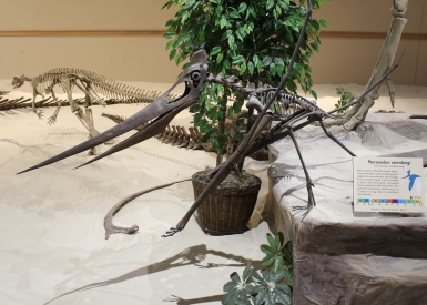 Pteranodon sternbergi