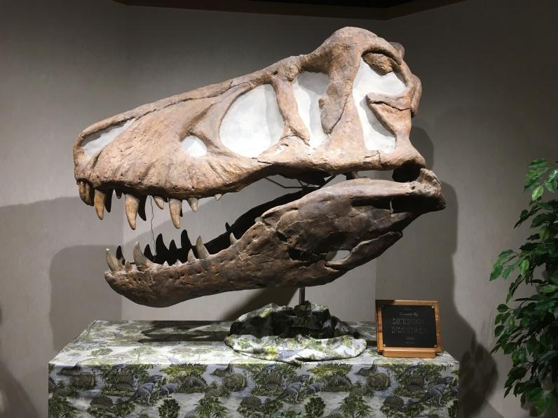 another dinosaur skull